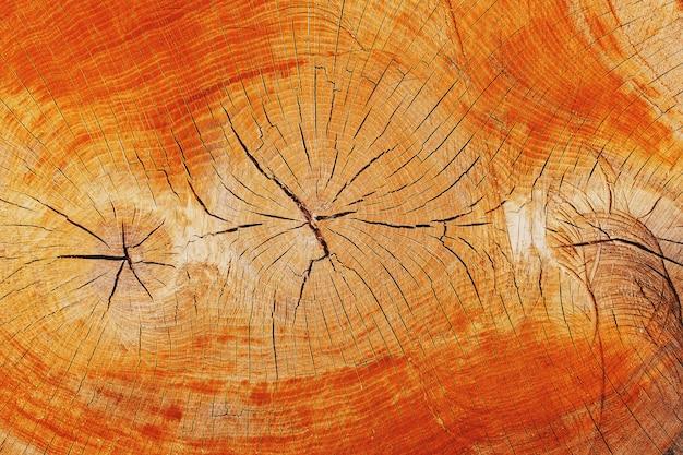 オークの切り株が伐採され、3つの年輪が付いた幹セクション