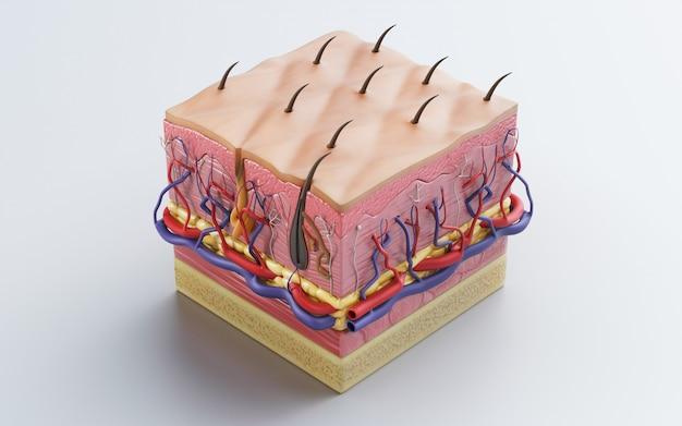 人間の皮膚、皮膚構造、体脂肪。皮膚に設定された詳細な3d外科用ステッチ。 3dレンダリング