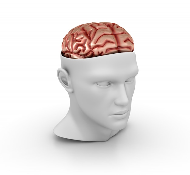 3d cartoon human head with brain