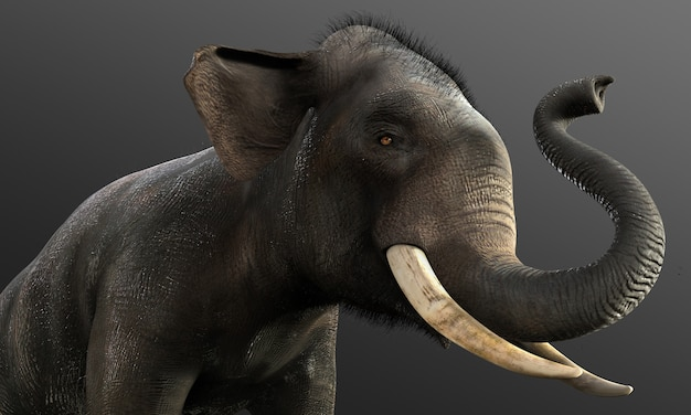 3d elephant isolated on black background