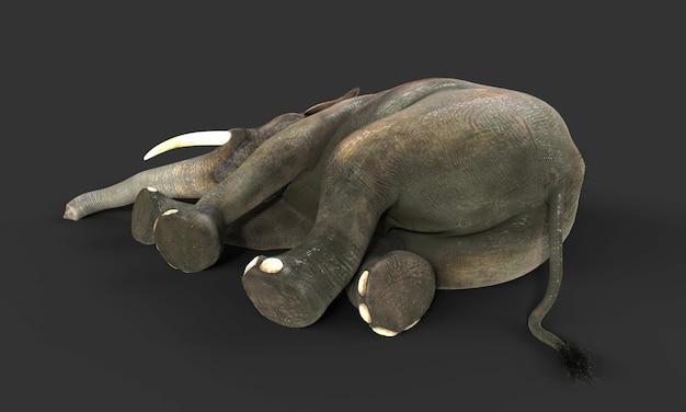 3d elephant isolated on black background