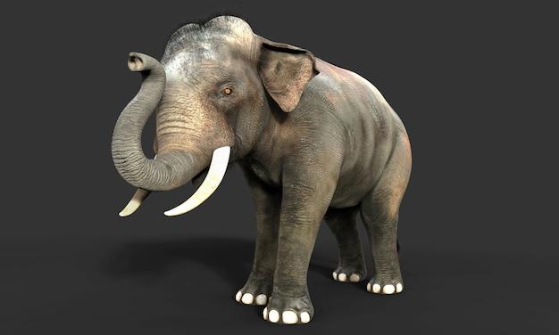 3dの象は、黒の背景に