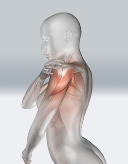 3d female figure holding shoulder with muscle view