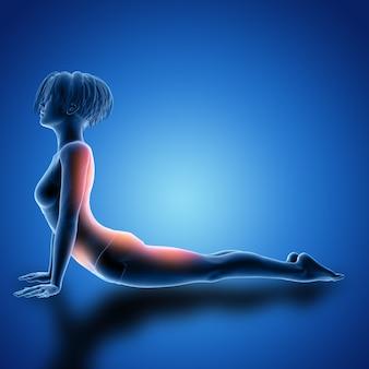 3d женская фигура в позе кобры с выделенными мышцами
