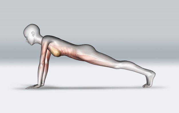 3d female figure in plank pose with muscles highlighted