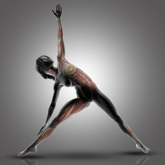 3d female figure in triangle yoga pose with muscles used highlighted