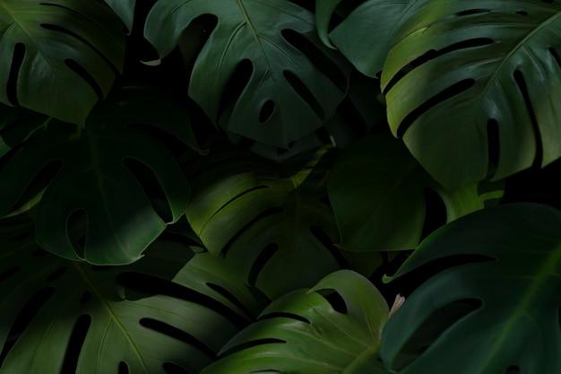 3d緑のヤシの葉の組成
