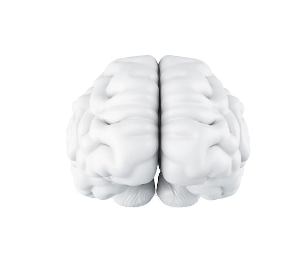 3d human brain.