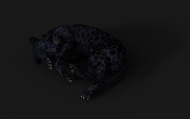3d illustration black panther isolate on black