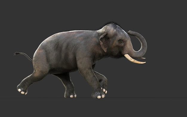 3d illustration elephant isolate on black background