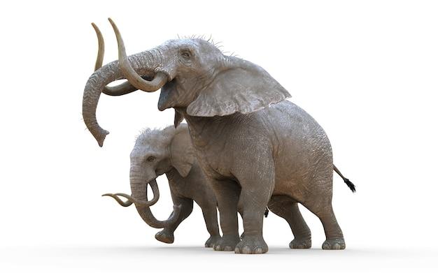 クローズアップパスと白の背景に3dイラスト象を分離