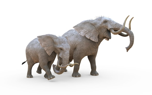 3d illustration elephant isolate on white background with clipping path