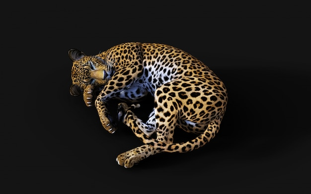 3d illustration of isolated leopard on black background