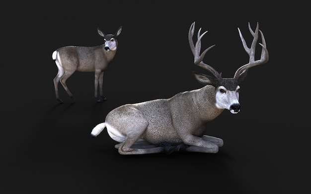 3d illustration of mule deer wildlife in the american west isolate on black background with clipping path