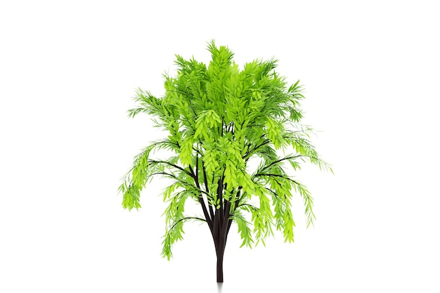 3d illustration of realistic green decorative tree isolated on white background.