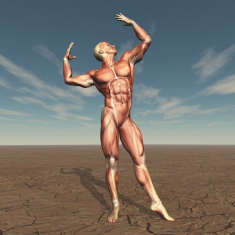 3d male body builder with muscle map in barren landscape
