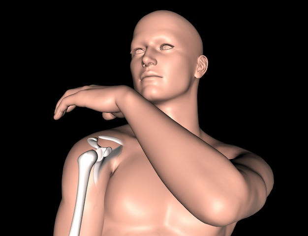 3d male medical figure with shoulder bone highlighted