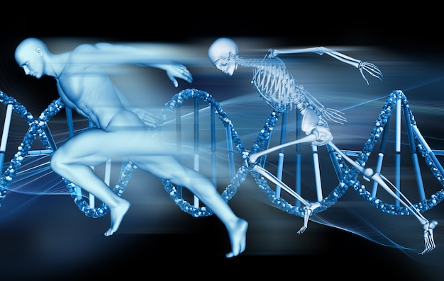 3d medical background with male figure and skeleton sprinting on dna strands
