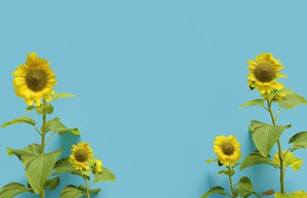 青い背景の幸福感にひまわりの3dリアルなレンダリング