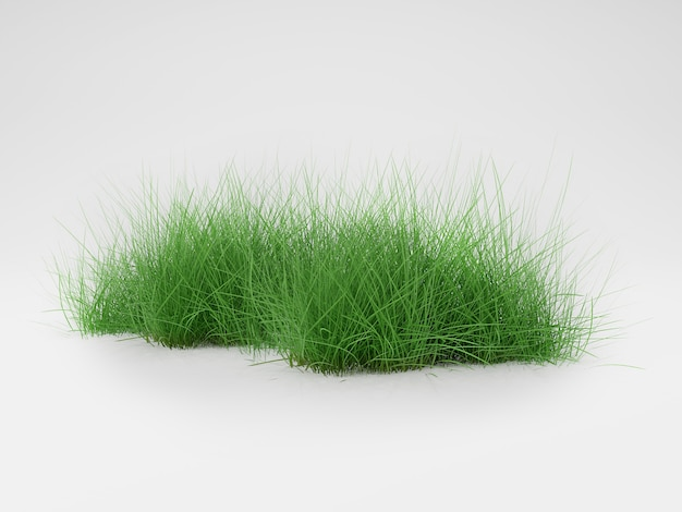 3d render grass isolated on white background