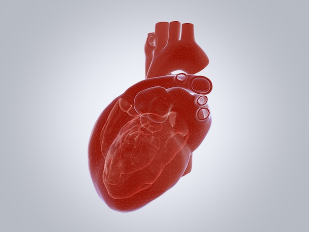 3d render of the human heart, x-ray mode.