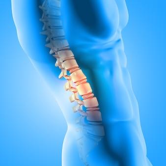 Rendering 3d di una figura medica maschile con colonna vertebrale evidenziata