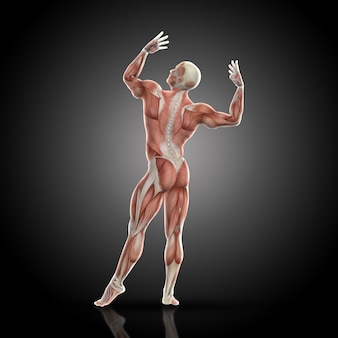 3d render of a medical figure bodybuilder with muscle map in a bodybuilding pose rear view