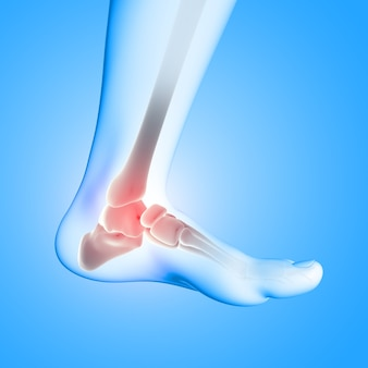 3d render of a medical image of close up of ankle bone in foot