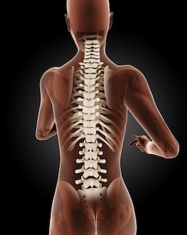 3d визуализации женского медицинского скелета с крупным планом на спине