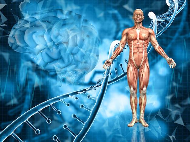 男性の姿、dna鎖、脳の医学的な背景の3dレンダリング