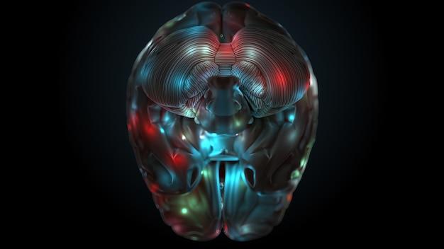 3d визуализация мозга с яркими и освещенными зонами. поверхность мозга выделена разными цветами.