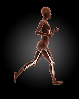 3d render of a running female medical skeleton