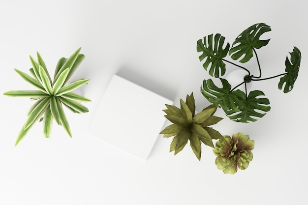 3d render top view of tropical plants isolated on white