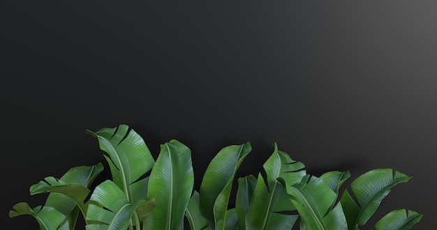 3d rendering of banana leaves and black background.