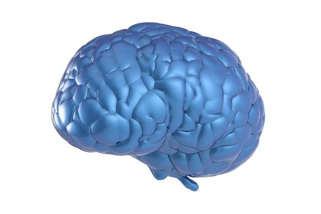 白い背景に青い脳を3dレンダリング