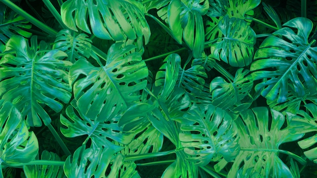 3d rendering cg green abstract plants background