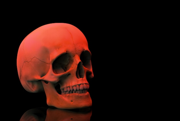 3d rendering. a horror red halloween human head skull bone woth reflection isolated on black .
