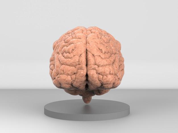 灰色の背景に人間の脳を3dレンダリング