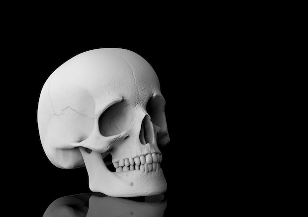 3d rendering. a human head skull bone with reflection on black .