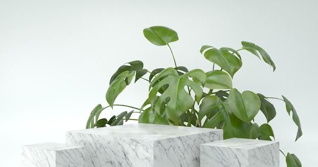 3d rendering of marble podium and monstera plant.