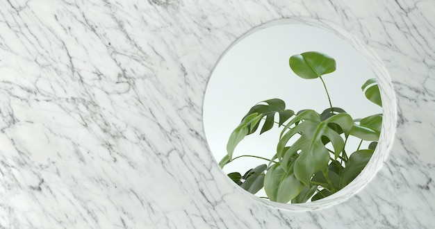 3d rendering of marble wall and monstera plant.