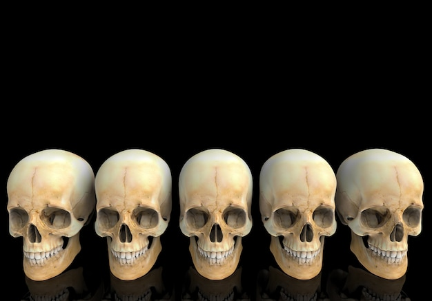 3d rendering. old  human head skull bone row with reflection on black .