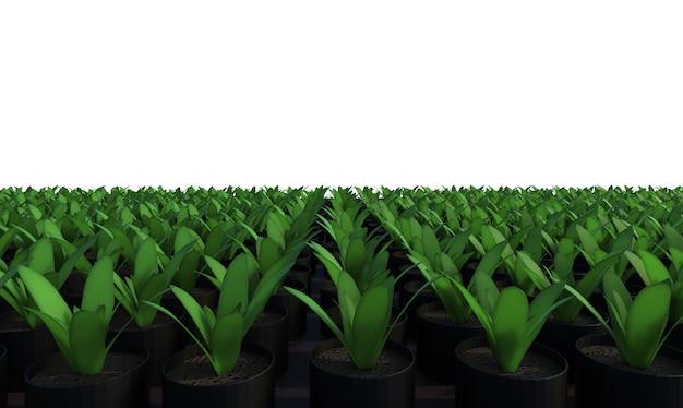 3d-рендеринг поднятого растения в грядке, изолированной на белом