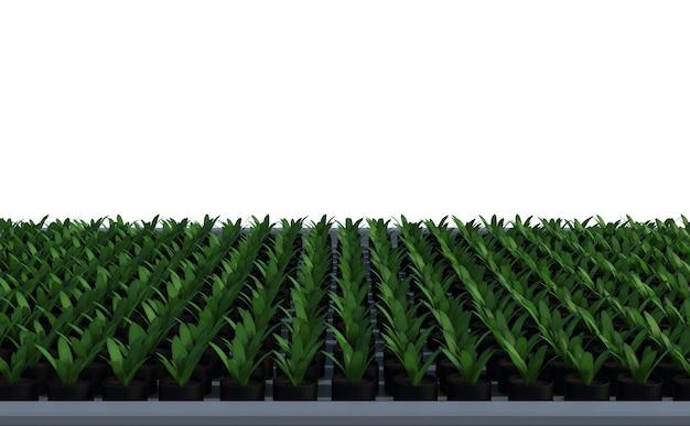 3d-рендеринг поднятого растения в грядке
