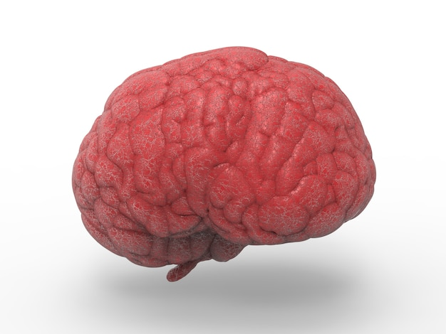 3d rendering red brain on white background