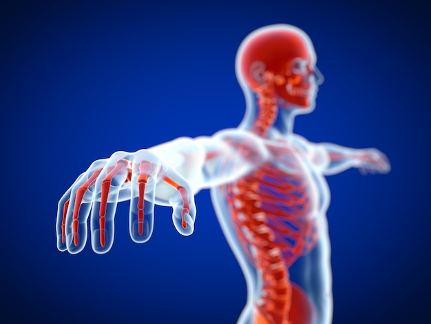 3d rendering of a red skeleton view with x ray