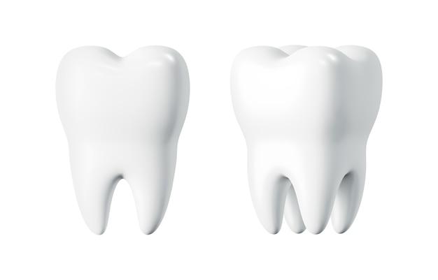 白い背景の 3 d レンダリングの歯