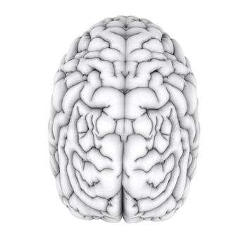 3d rendering white human brain isolated on white