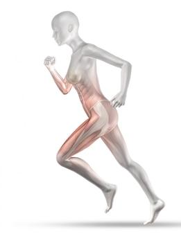 3d женская медицинская фигура с бегом по частичной карте мышц