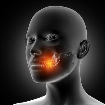 強調表示された歯を持つ3d女性の姿